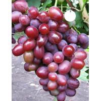 Виноград Подарок Ирине (Средний/Розовый)