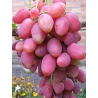 Виноград Розалинда (Ранний/Розовый)